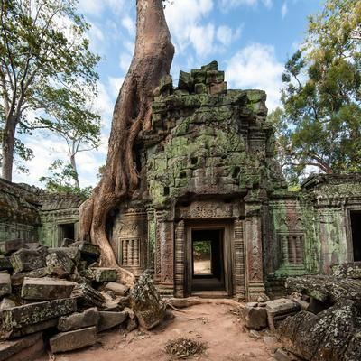 Picture of Angkor Wat Cambodia Ta Prohm Khmer ancient Buddhist temple in jungle forest Famous landmark, place of worship and popular tourist travel destination in Asia stock photo, images and stock photography. Angkor Wat, Angkor Vat, Ta Prohm, Temple Ruins, Buddhist Temple, Mayan Ruins, Ancient Ruins, Ancient Greek, Amazing Nature