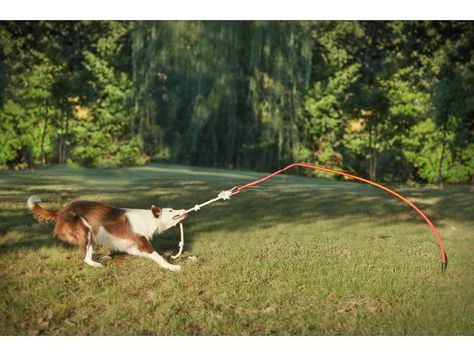 Details about Tether Tug Outdoor Dog Toy Interactive Tugging