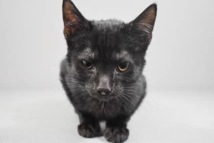 Adopt Sammy On Petfinder Help Homeless Pets Cat Adoption Homeless Pets