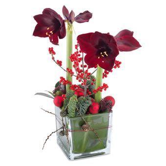 Frohe Amaryllis Amaryllisdeko Frohe Amaryllis Christmas Flowers Flower Arrangements Rose Arrangements