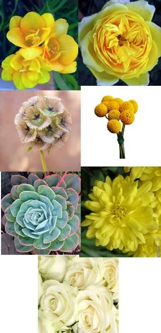 Floral inspiration - freesia, yellow garden roses, scabiosa pods, craspedia, succulents, yellow mums, ivory roses