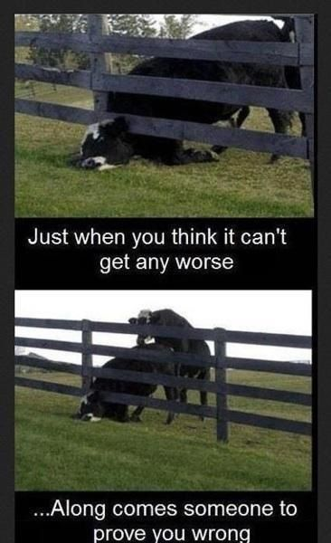 Pin by moe alba on you think you have a bad day! | Funny ...