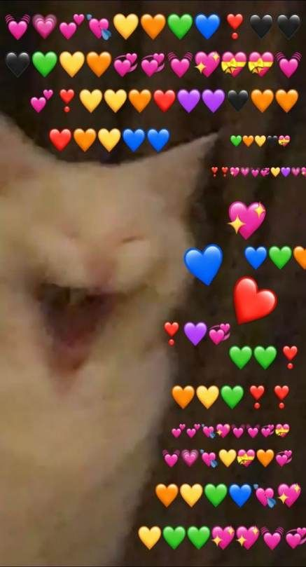 61 Ideas Memes Reaction Cat For 2019 Cute Love Memes Cute Memes Cute Cat Memes