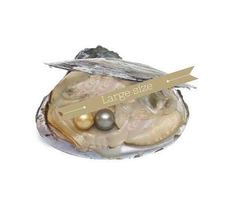 Individually Vacuum Sealed 20 Akoya Oysters with LARGE pearls