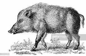 Pin En Animales De Diseno Heraldico