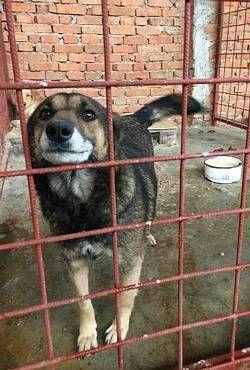 Tiere In Not Seite Hunde Aus Rumanien Hunde Aus Rumanien Tiere In Not Tiere