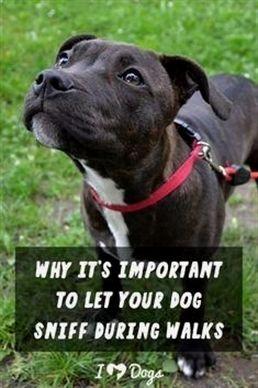 Dog Training By Pj Dog Training Mini Treats Dog Training 33024