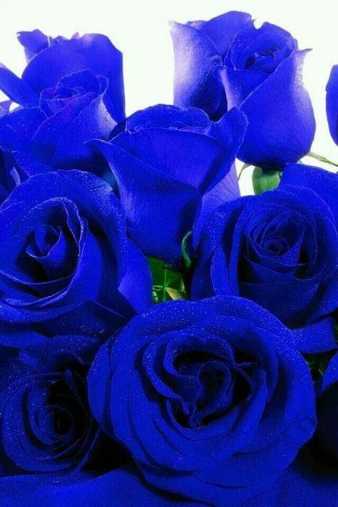 Mazzo Di Fiori Blu.Immagine Bellissimi Fiori Di Roberto Fadda Su Rose Blu Rose