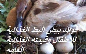 فوائد بيض البط الغذائية للاطفال وقيمته الغذائية العامه Duck Eggs Garden Sculpture Duck