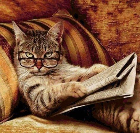 My cat loves to read #cat #cats #catsofinstagram #of #catstagram #instagram #instacat #catlover #kitten #catlovers #kitty #meow #dog #pet #cute #love #catoftheday #pets #kittens #gato #catlife #animals #world #animal #cutecat #catlove #gatos #chat #adoptdontshop #bhfyp