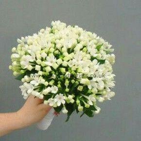 Bouvardia Bouquet Sposa.Bouquet Di Bouvardia 2 Bouquet Bouquet Di Nozze Bouquet Matrimonio