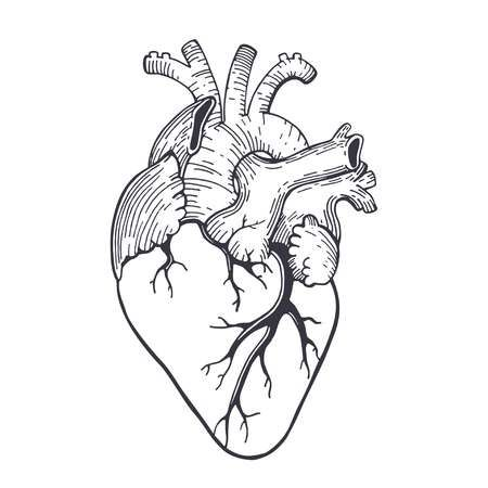 Vector Realistic Anatomical Heart Anatomical Heart Drawing Anatomical Heart Heart Coloring Pages