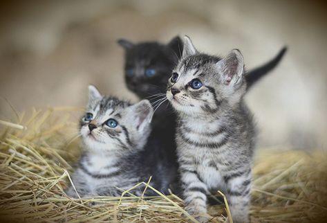 Cute Sweet Kitten Animals Cuccioli Gatti Animali