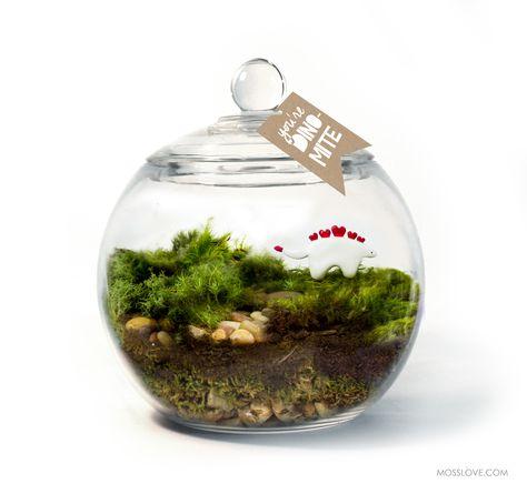 dino love terrarium moss love terrariums moss terrarium rh pinterest com
