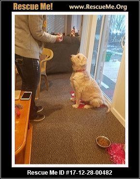 Adopt Eli On Petfinder Small Dog Rescue Dog Adoption Losing A Dog