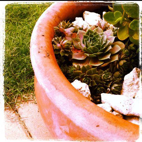 Succulents- color inspiration
