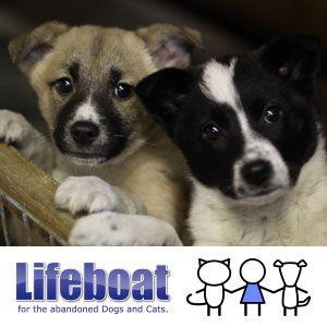 私たちは 保健所などの行政機関で殺処分されてしまう犬と猫を保護し 里親さんを探すことで救命を行う非営利団体です 年間1300頭以上の救命実績があります 里親 犬 犬と猫