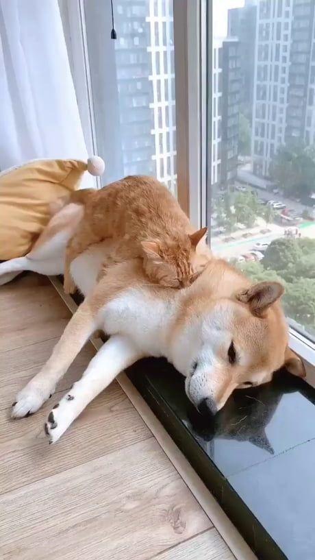 That cat is in heaven. lol