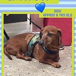 Pin By Lisa Fagan On Weiner Dogs Pet Adoption Dachshund