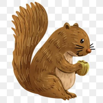 Squirrel Eating Walnuts Illustration Squirrel Clipart Squirrel Eat Png Transparent Clipart Image And Psd File For Free Download In 2021 Squirrel Clipart Squirrel Illustration Squirrel