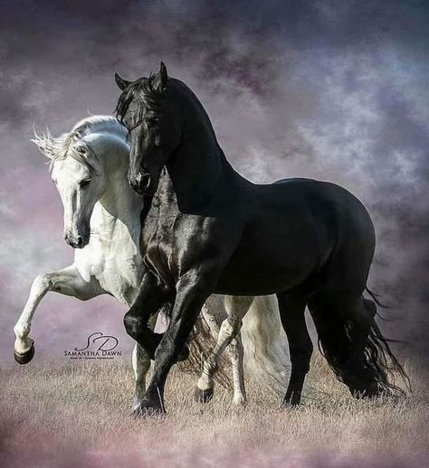 STUNNING HORSE PORTRAIT CANVAS #28 QUALITY HORSE CANVAS WALL ART A1