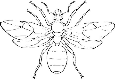 Hornet Google Search Insect Coloring Pages Bug Coloring Pages