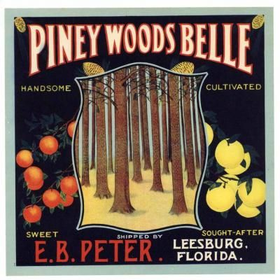 Leesburg Florida Belle of Florida Orange Citrus Fruit Crate Label Art Print