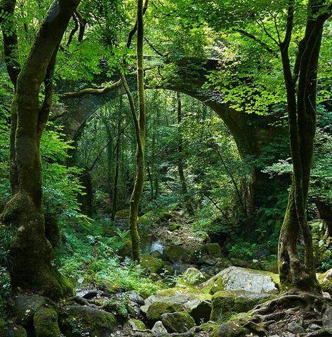 Un bosque de ensueño en A Coruña para descubrir esta primavera - Foto 1