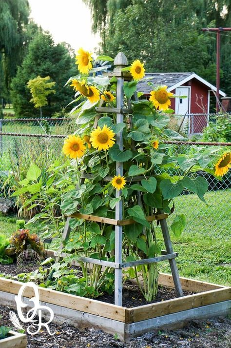Front Yard Garden Design Delightfully Pretty Wooden Sunflower Pyramid - DIY Flower tower ideas are a great way to add some color, and the height really helps you maximize your space. Find the best designs! Mailbox Landscaping, Garden Landscaping, Landscaping Borders, Florida Landscaping, Landscaping Rocks, Luxury Landscaping, Landscaping Design, Diy Landscaping Ideas, Shade Landscaping