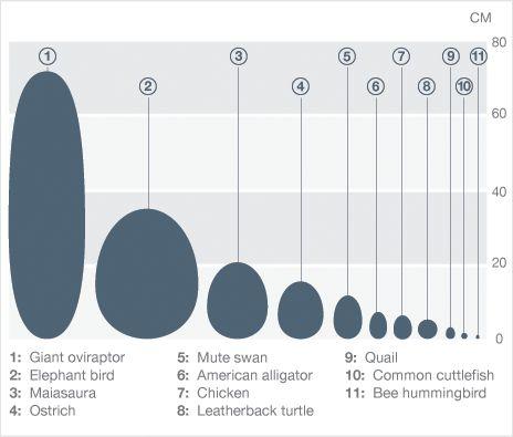 An Illustration Showing The Range Of Egg Sizes Eggs Eggs