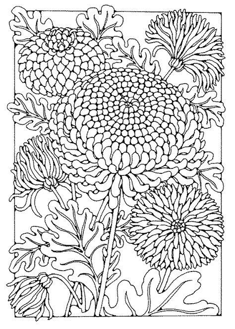 chrysanthemum coloring pages - chrysanthemum