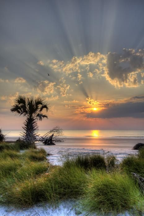 Sunrise, Hunting Island State Park, out side Beaufort, SC. You can camp right over the dunes.