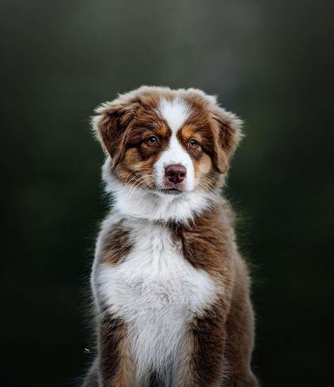 Gucci 😍😍 - #hikingwithdogs #dogsthathike #hikingdogsofinstagram #animaladdicts #ruffpost #weeklyfluff #dogscorner #dailybarker…