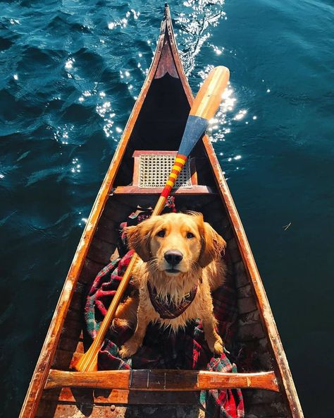 Photo: @kjp...   Photo: @kjp      #newengland #landscapephotography #travel #traveler #travelingphotographer #traveldiary #travelphoto #travelphotography #travelgram #traveladdict #travelblogger #travellover #travelgoals #photo #photooftheday #photography #photographer #wildlifeplanet #globetrotter #wanderlust #wildlife #stilllifephotography #wildlifephotography #nature #cutedog #naturephotography #natureaddict #dogsofinstagram #mansbestfriend #dogstagram