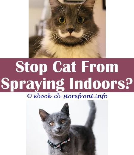 10 Warm Cool Ideas How To Find Where Your Cat Has Sprayed Homemade Cat Deterrent Spray How To Get Two Male Cats To Stop Spraying When Do Bengal Cats Start Spra