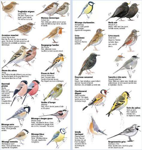 Identifier Les Oiseaux Des Jardins Oiseaux Des Jardins Identifier Les Oiseaux Oiseaux De France