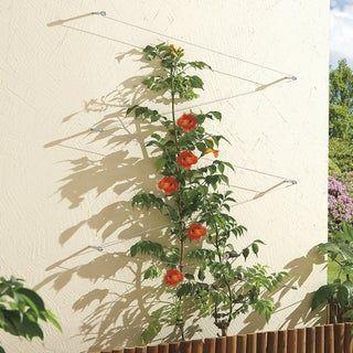 Kit Palissage Plantes Grimpantes Nortene Plante Grimpante Plante Gazon