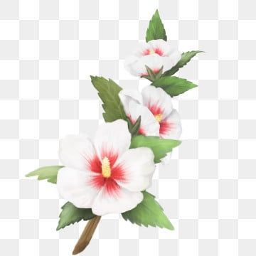 Flower Illustration Leaf Materials South Korea Hibiscus South Korea Flower Three Temple Flower Clipart Le In 2020 Flower Illustration Flower Png Images Flower Painting