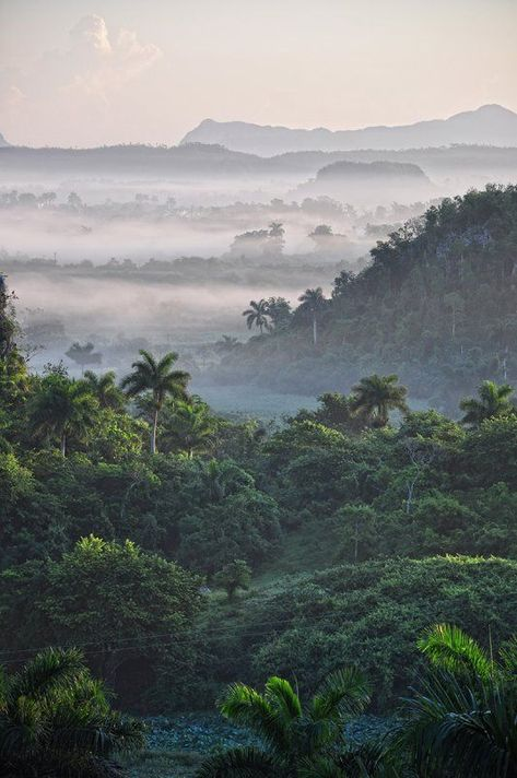 Early-morning fog hangs in the Valle de Viñales, Cuba, clinging to the jungled . Early-morning fog hangs in the Valle de Viñales, Cuba, clinging to the jungled peaks that climb sharply from the world-famous tobacco plots. Les Bahamas, Places To Travel, Places To Go, Nature Photography, Travel Photography, Morning Photography, Trinidad, Tropical Forest, Cuba Travel