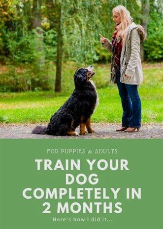 Dog Training Equipment K9 Dog Training Place Pitbull Dog Gym