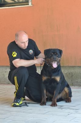 Our Champion Rottweiler Ch Juda Ad Dirah Standing At Stud At World