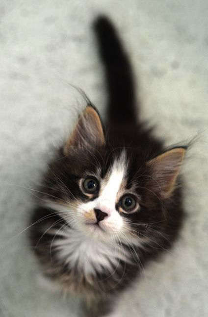 Kittens For Sale Near Eastbourne While Cute Animals And Nature My Kittens For Sale Near Me Ohio Kittens Cutest Cute Cats And Kittens Pretty Cats