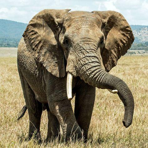 The Welfare of Wild Animals