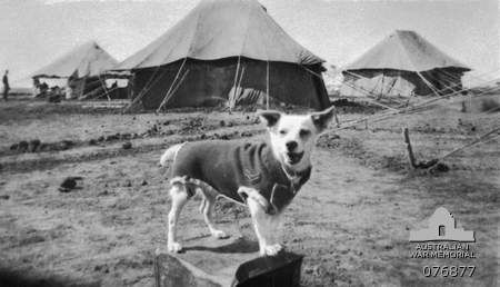 Horrie the wog dog..This is a great story from WW2.