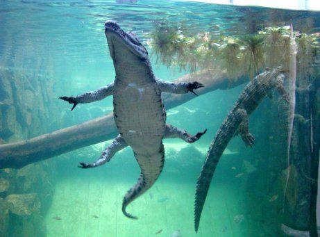 Image result for mauritius aquarium