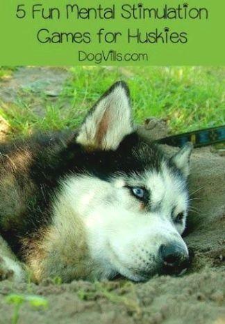 Guard Dog Training Guarddogtraining In 2020 Husky Training