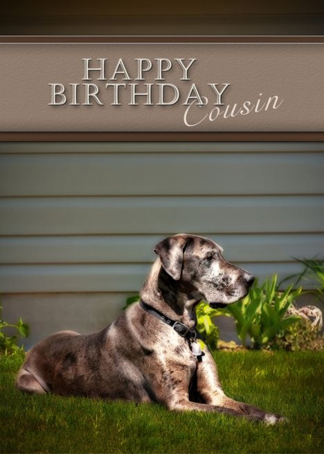 Happy Birthday Cousin Great Dane Dog On Grass Card Great Dane