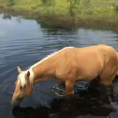 Someone enjoy the water! - Horses Funny - Funny Horse Meme - #horsememe #horse #funnyhorse -  Does your horse like water?  The post Someone enjoy the water! appeared first on Gag Dad.