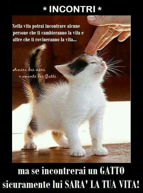 Incontri annuncio i Love Cats