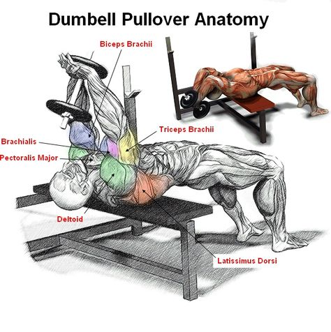 Dumbell Pullover is a great compound exercise that works the Lats ...